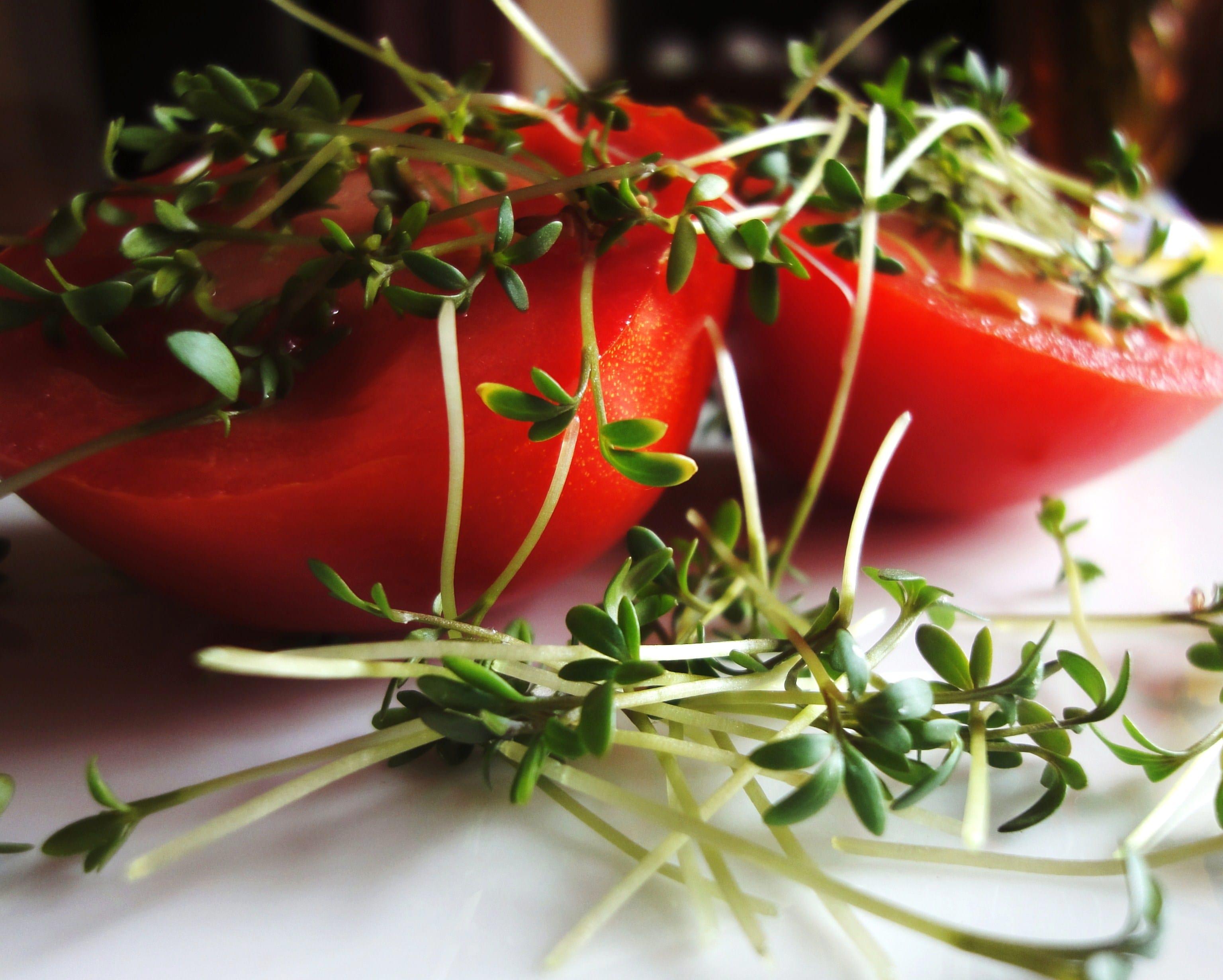 tomaten-kresse